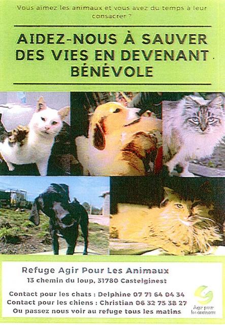 Refuge des chiens de Castelginest 31780